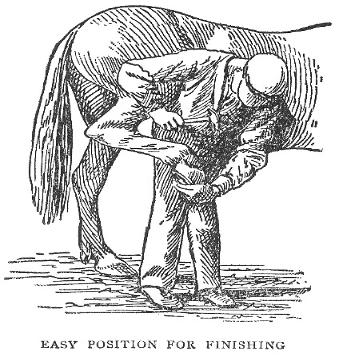 Easy Position for Shoeing a Horse